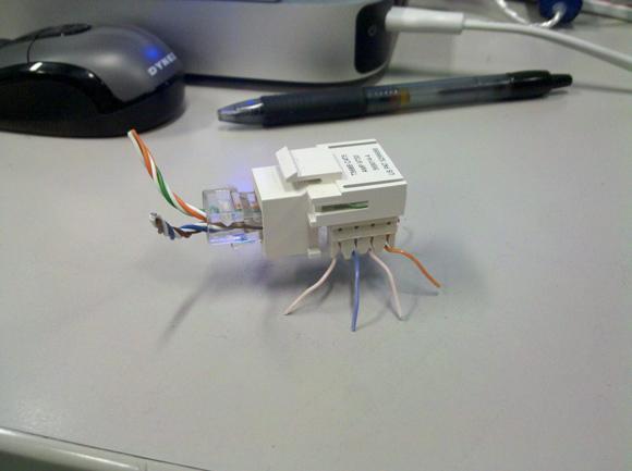 Network Bug