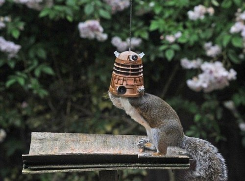 Doctor Who Dalek Bird Feeder