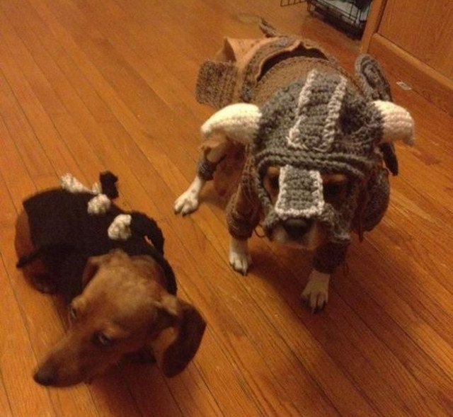 Dog Skyrim Cosplay