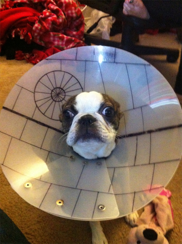 Star Wars Death Star Dog Cone