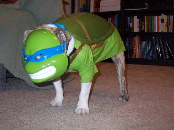 Teenage Mutant Ninja Dog